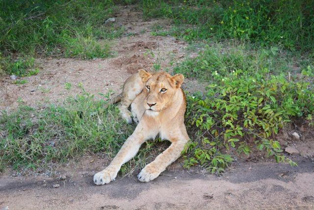Kapama River Lodge #safari via youmademelikeyou.com