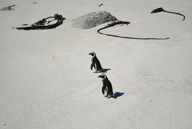 Boulders Beach, South Africa via youmademelikeyou.com