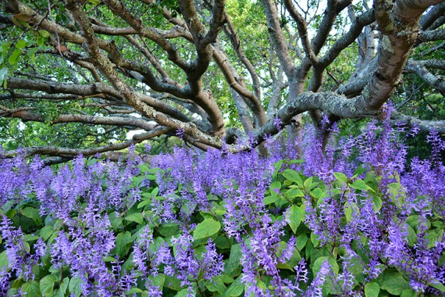 Kirstenbosch Botanical Garden, Cape Town, South Africa via youmademelikeyou.com