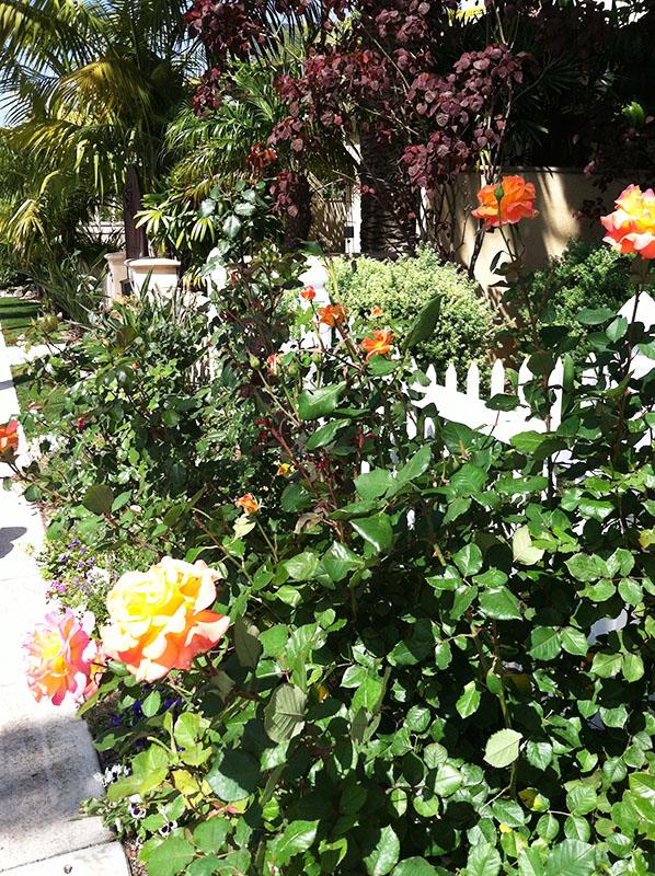 Coronado Beach, San Diego via youmademelikeyou.com