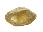 Dwell Studio Turtle Shell Paper Weight