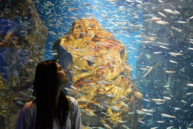 Osaka Aquarium via youmademelikeyou.com